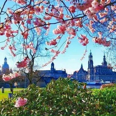 Dresden für Genießer