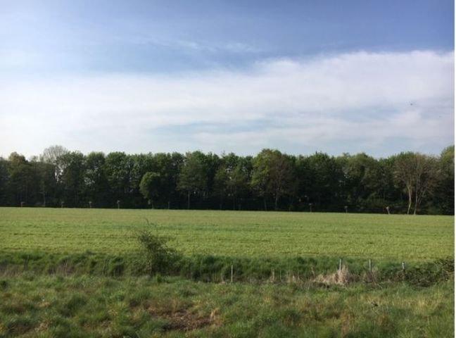 Blick ins Grüne; Richtung Süden