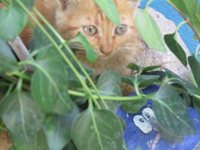 Die berühmten Ayvaliker Katzen
