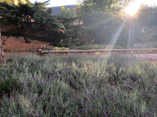 Das Lavendelfeld blüht bald wieder
